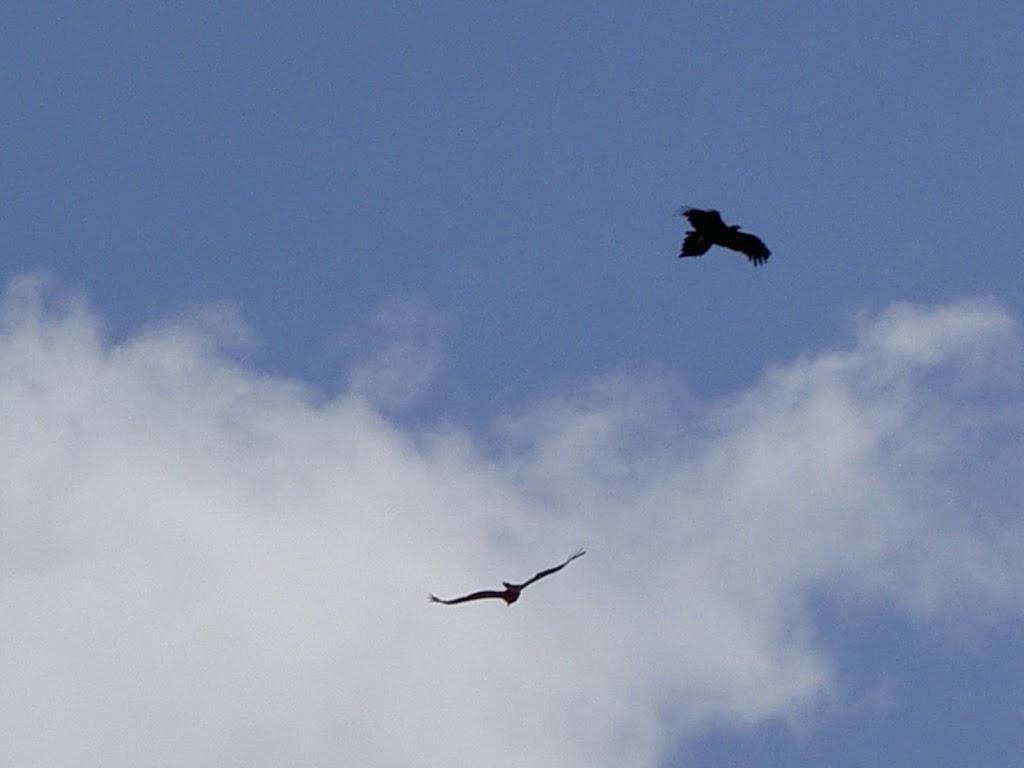 Birds of prey above Pindar Cave Track