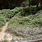 Bouddi Coastal Trail up to eastern headland of Maitland Bay (19862)