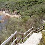 Bouddi Trail boardwalk to Gerrin Point (19877)