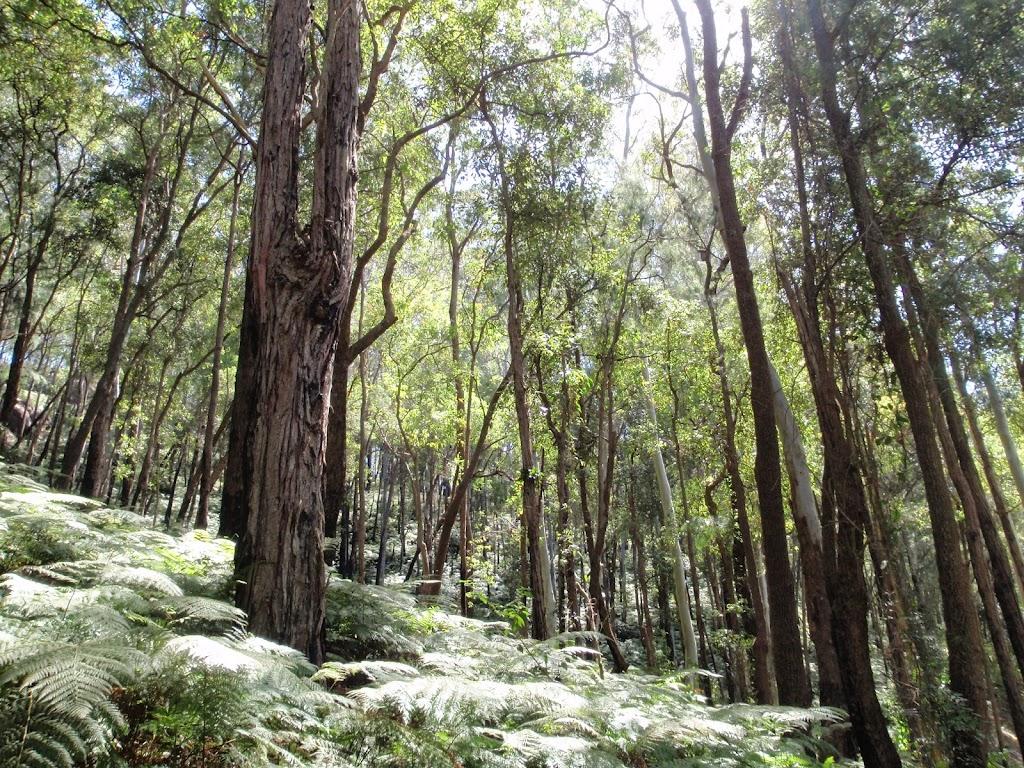 Rumbalara scenery