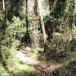 Plenty of vines on the rainforest walk (199300)