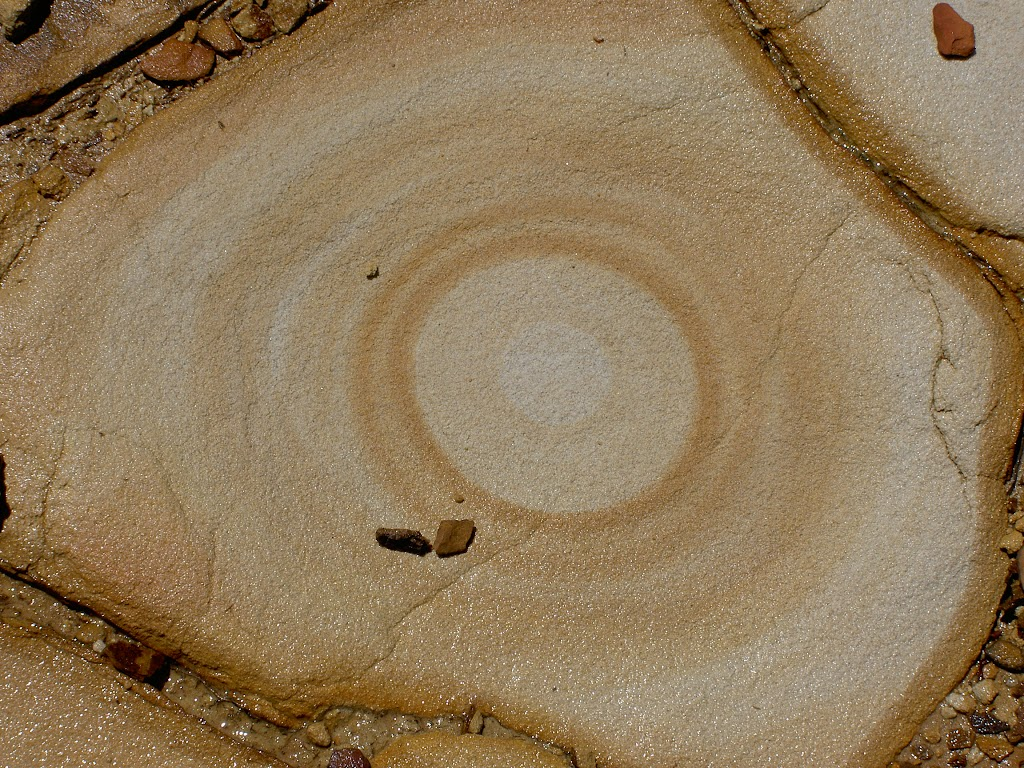 Concentric circles in rock (19949)