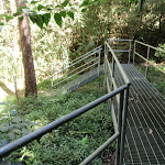 Metal steps and walkway on the rainforest walk
