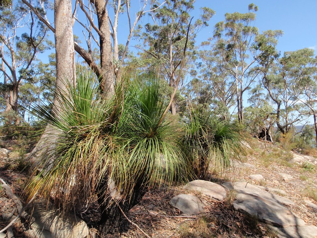 Grass trees and dry forest on ridge