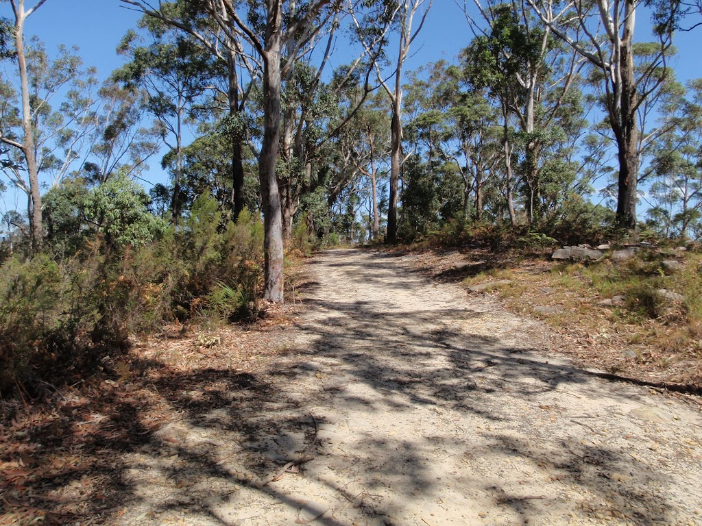 Dry forest on the ridgetop