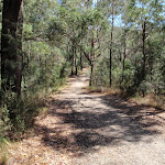 Along the management trail
