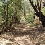 Rumbalara EEC access track (202144)