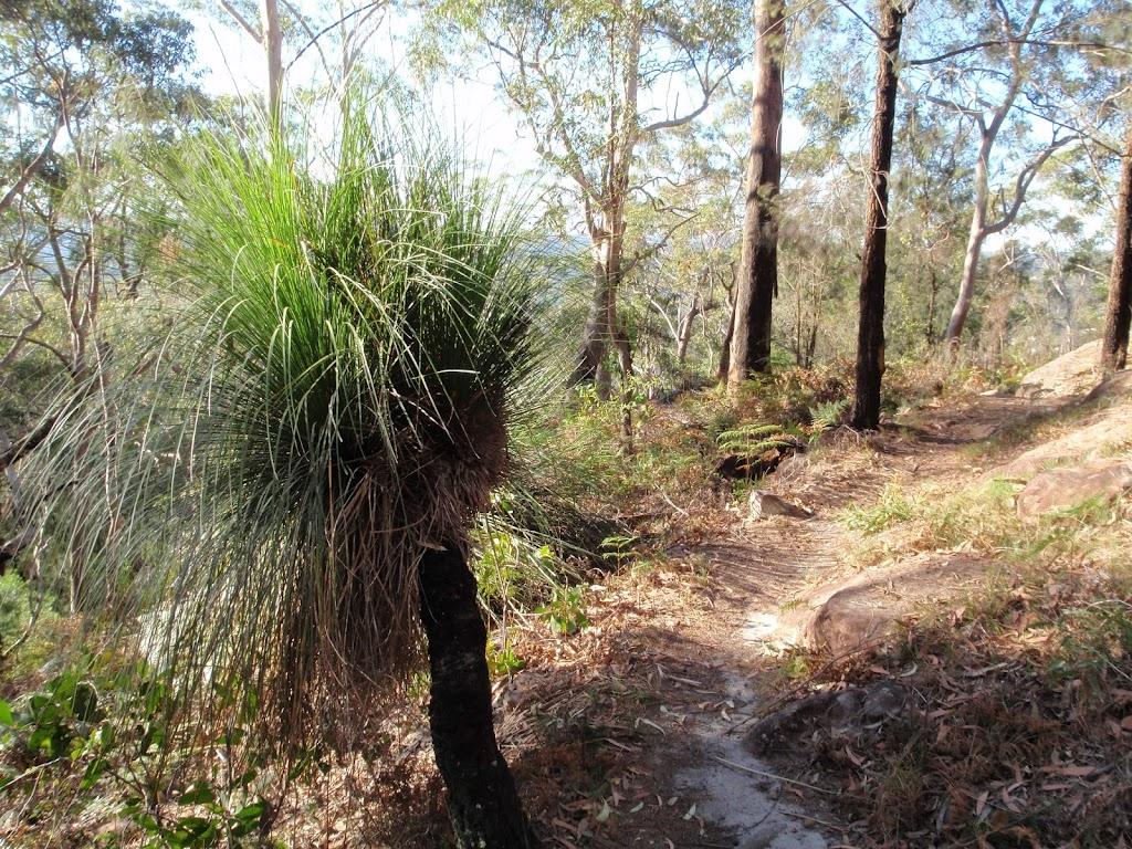 Old grasstree