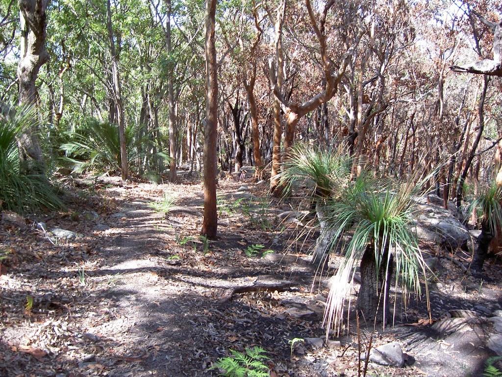 Bullimah Track's burnt bush