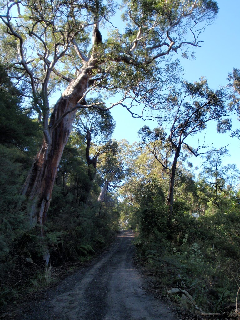 Great trees and views on the Pacific Trail (204415)