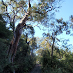 Great trees and views on the Pacific Trail