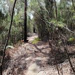 Highway Ridge track (206194)