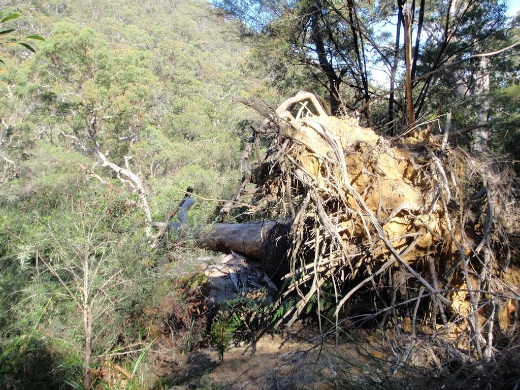 Fallen tree on Defile Track