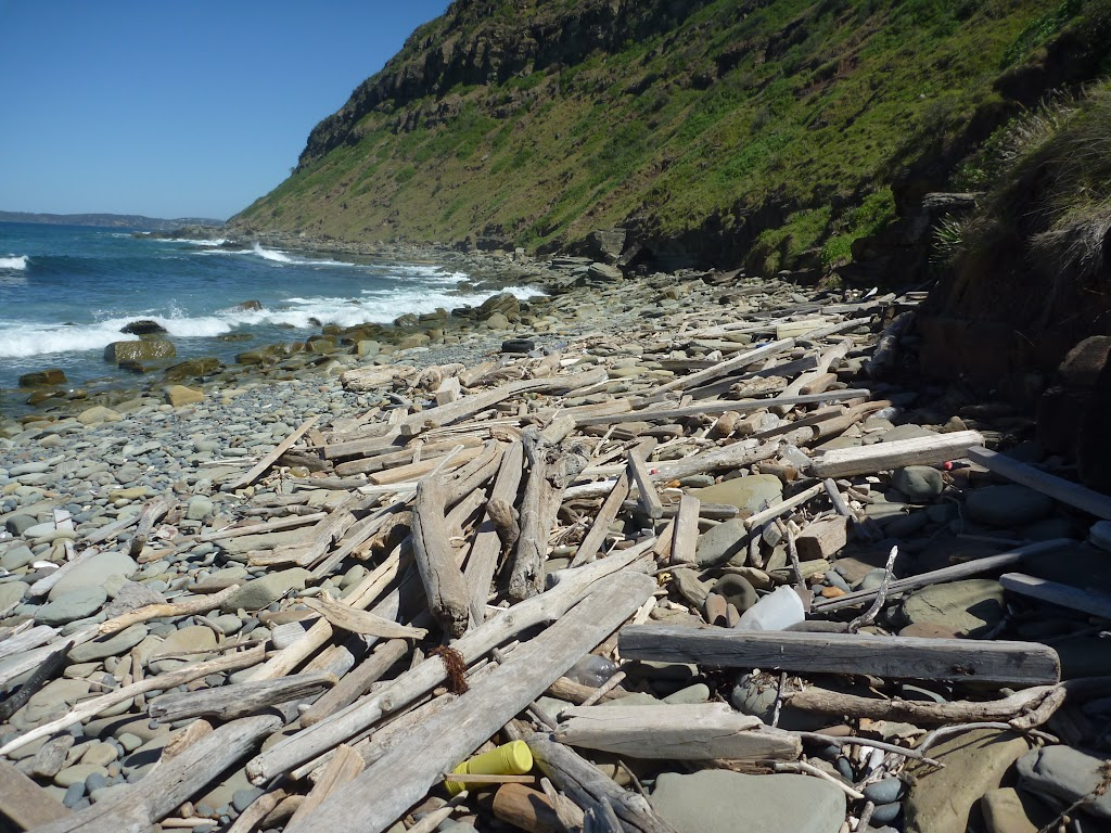 Washed up timber