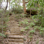 Steps to Dingeldei Picnic Area (21524)
