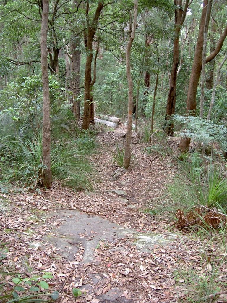 Mt Bouddi Trail (21530)