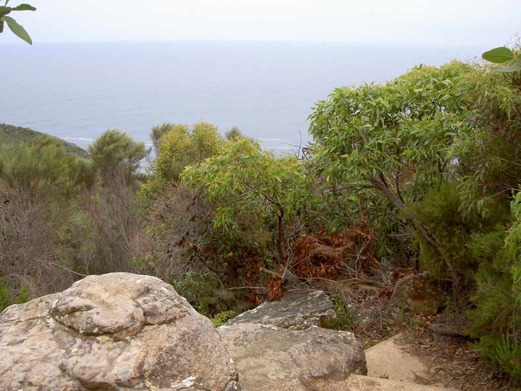 View from Bouddi Lookout