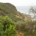 Bouddi Coastal Walk to Caves Bay (21584)