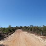 Walking along Warrah Trig Rd (217790)