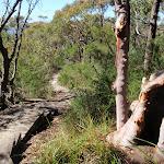 Footpath through the bush