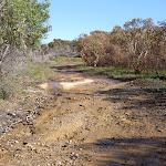 Management trail between roads (21821)