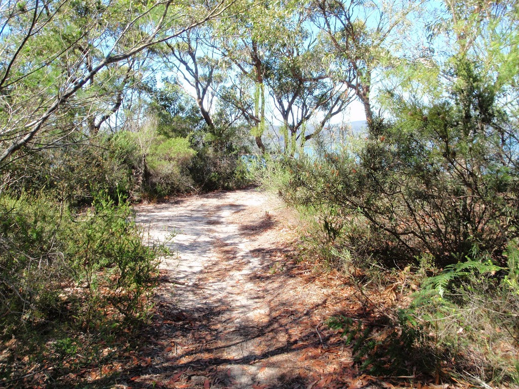 Track of the side of Pearl Beach / Patonga fire trail