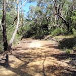 Walking along the Pearl Beach / Patonga fire trail (218459)