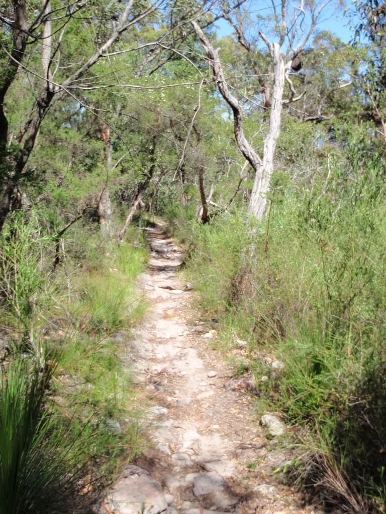 Flat section of Patonga Track