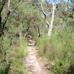 Flat section of Patonga Track (218669)