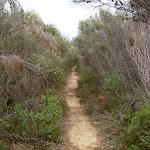 Steps down to Bouddi Trail (21875)