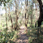 Flat section of Patonga track (218810)