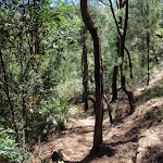 Walking along track east of Patonga