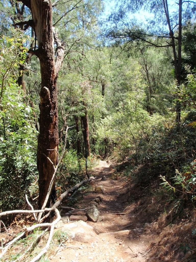 Walking along Patonga track