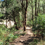 Near the bottom end of Patonga track (218885)