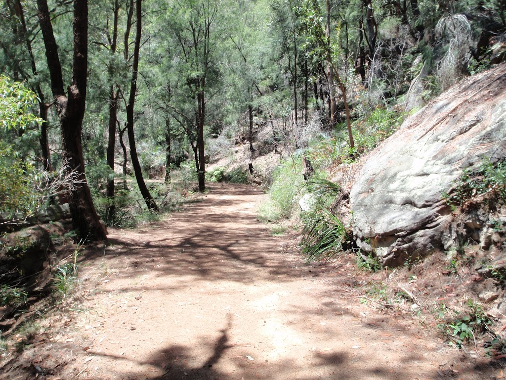 Along lower section of Pearl Beach / Patonga fire trail