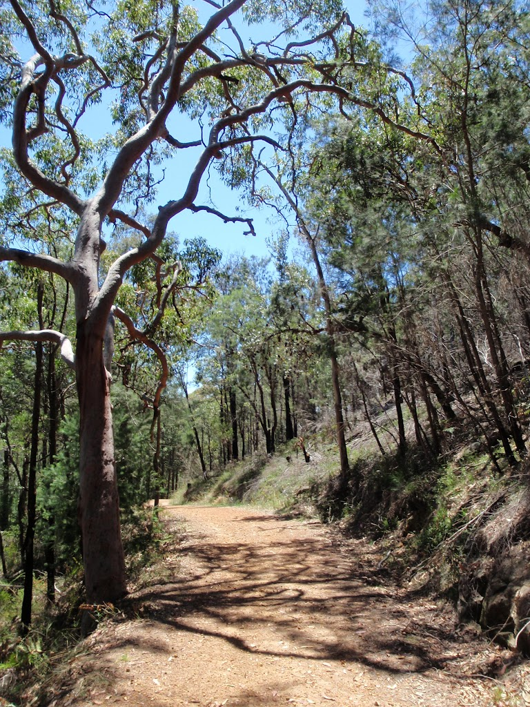 drier forest at lower section of Pearl Beach / Patonga fire trail (219605)