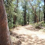 Pearl Beach / Patonga fire trail (219617)
