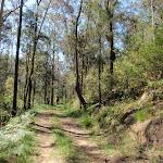 Simpsons Track beside Ten Mile Hollows Creek (221789)