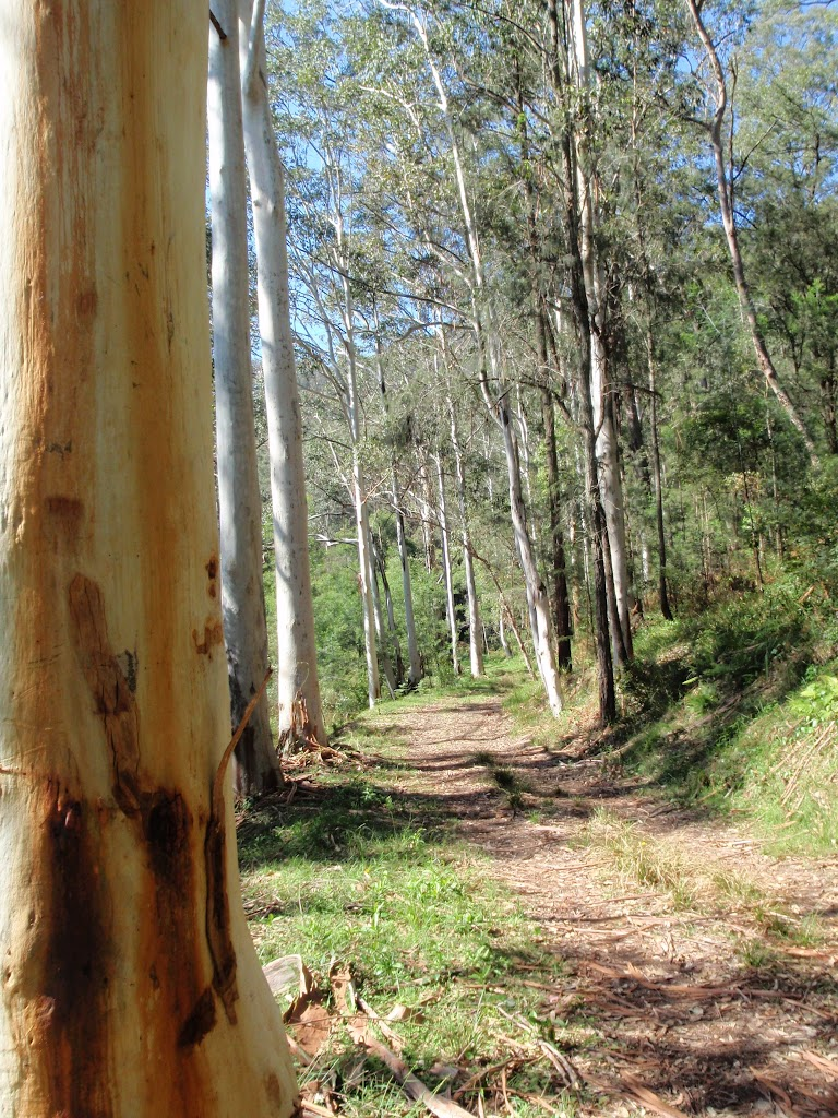 Tall gums on the Simpsons Track