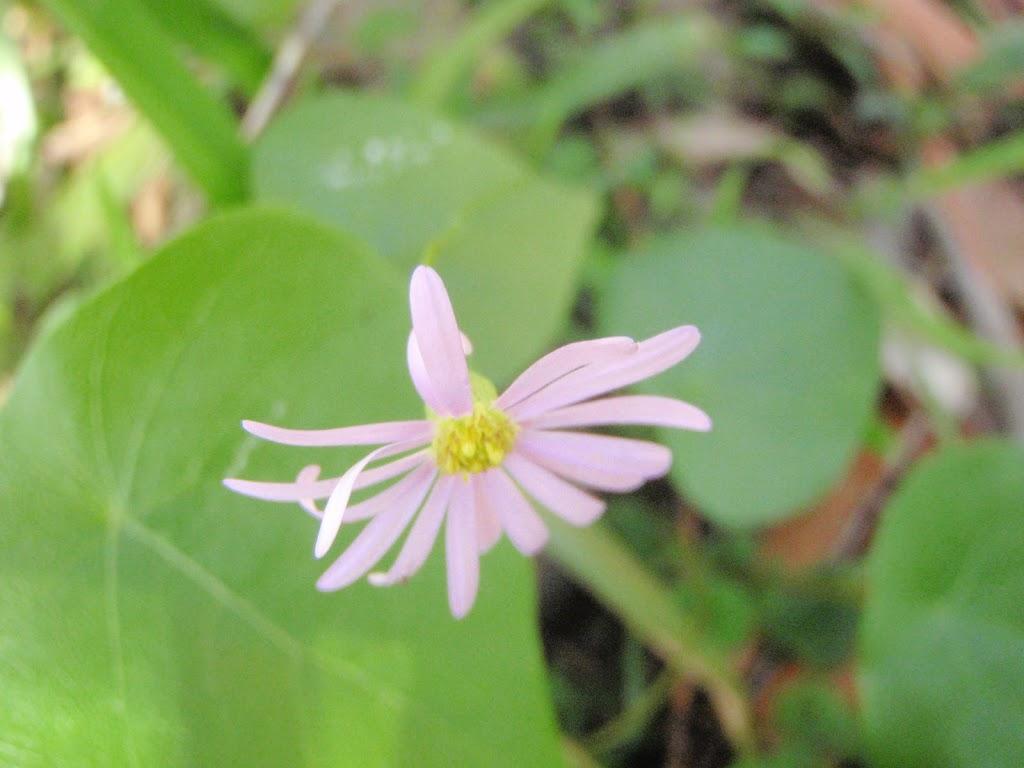 Flowers in Spring (221825)