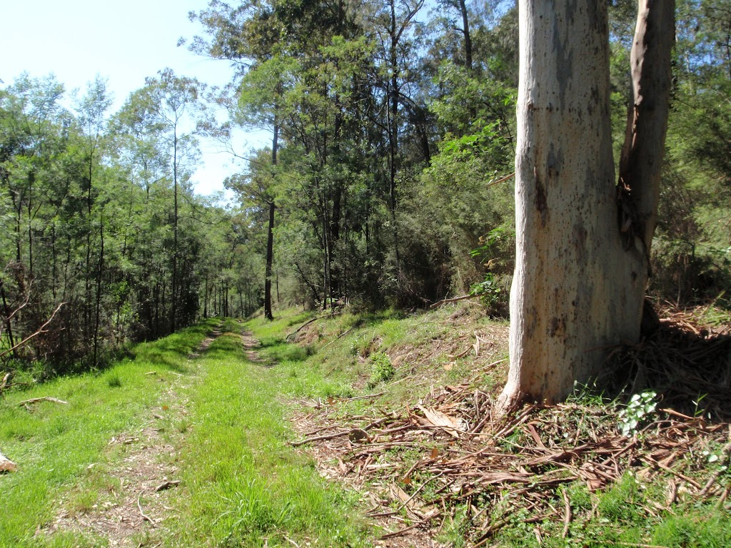 Large gums line much of the Simpson Track