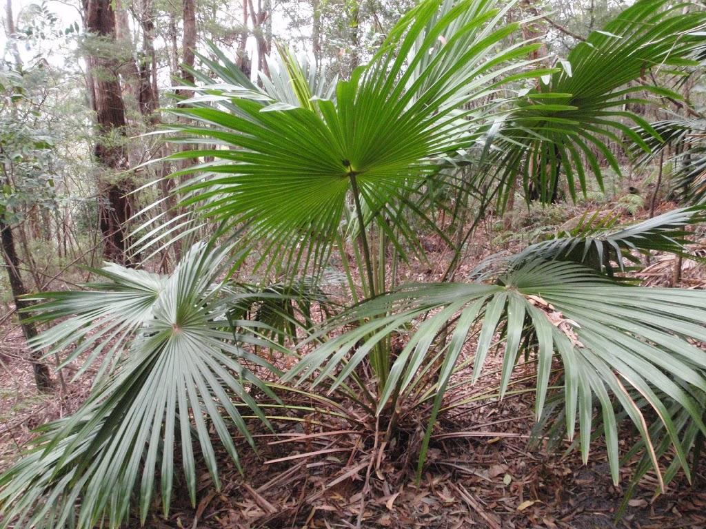 Palm (225505)