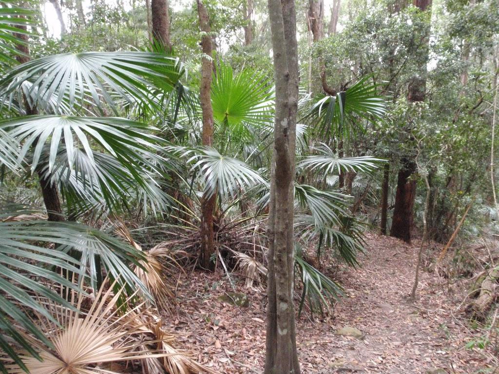 Palms on Toomey Walk