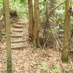 Dense forest (226027)