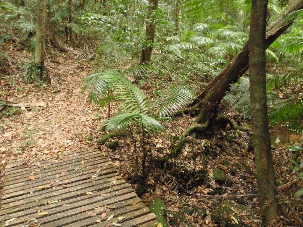 Ferns in gully