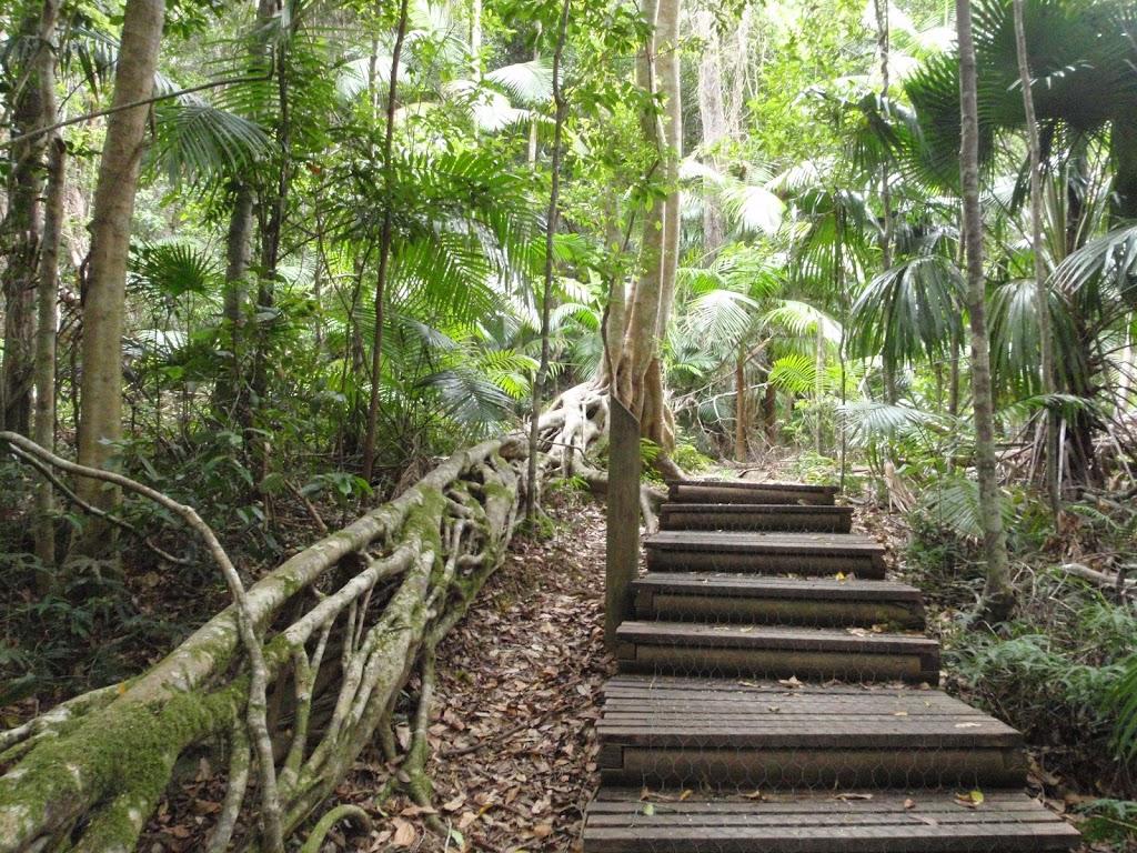 Steps beside fig tree tube
