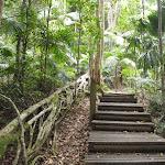 Steps beside fig tree tube (226273)