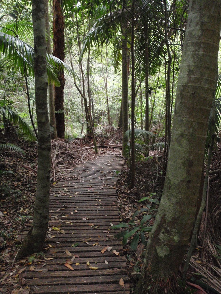 Track between Strangler Fig Tube and the Seymour Pond