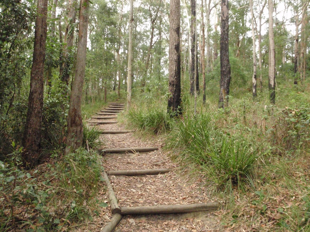 walking track near Katandra Rd Picnic Area