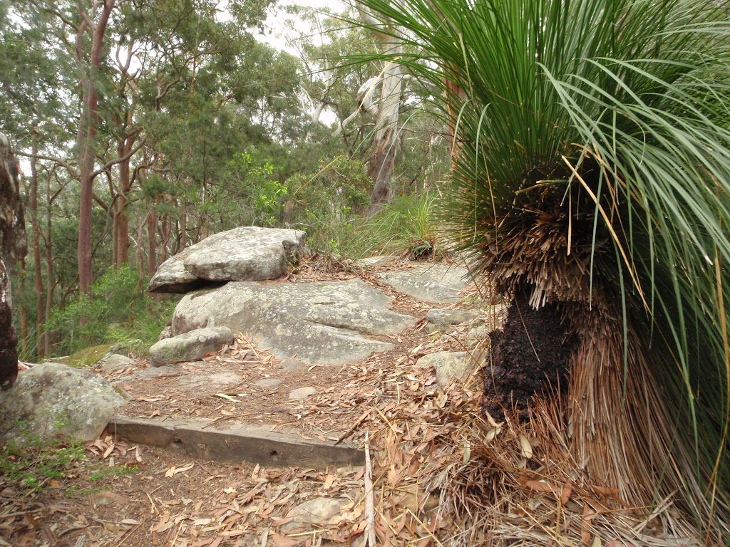 Grass trees on Graves Walk